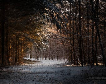 Winter forest | limited edition print | 30 x 20 cm