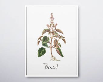 Basil Printable, Basil Plant, Basil Print, Basil Wall Art, Basil Herb, Basil, Herb Prints, Herb Garden, Kitchen Wall Art, INSTANT DOWNLOAD