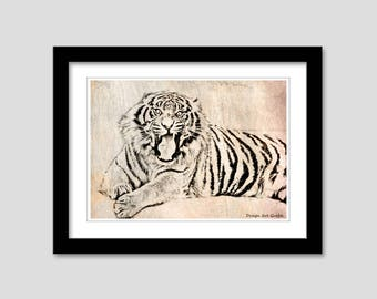 Animal collection - Tiger