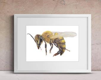 Bee Artwork // Honey Bee // Bee Print, Science Art, Giclee Print, Save the Bees, Wall Art, Printable Art, Wall Decor, Art Print, Animal Art