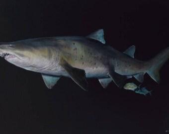 Ragged Tooth Shark Fine Art Painting Print