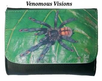 Venezuelan suntiger spider wallet