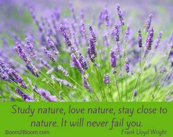 Quote Print/ Download/ Study Nature Frank Lloyd Wright Quote