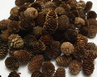 Larch cones 100 pcs, christmas wreath cones, dry natural cones, floristic decoration, wedding decoration, small cones, rustic craft cones #4