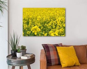 Field of yellow flowers - canvas (60cm x 40cm)