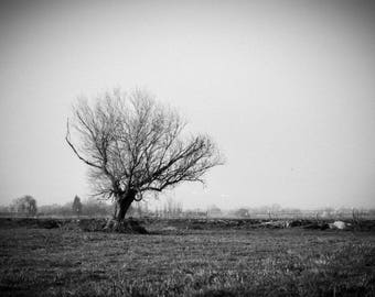 Black and White Photo of Lone Tree in a Field