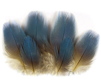 Macaw Blue Feathers 12401