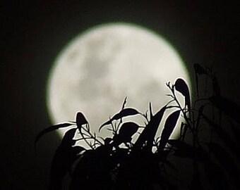 Moon over Nimbin, New South Wales