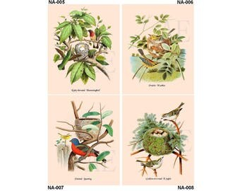 NA005-008 Artistic Ephemera Nature Print - Choose 8x10 or 5x7 - Bird Nest and Eggs Ruby-throated Hummingbird, Warbler, Bunting, Kinglet