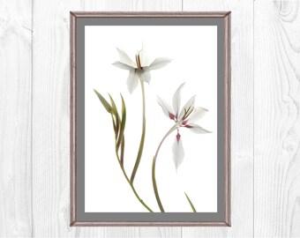 Printable Flower Art, Large Art Poster, Peacock Flower, Asian Inspired Art , White Flower Print, Japanese Style Wall Decor