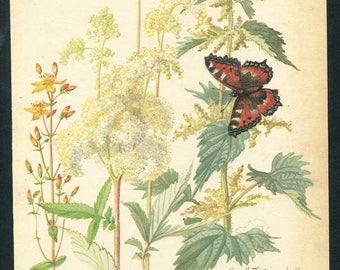 Vintage Nature Scene, Botanical,  Bookplate Illustration, Print, Herbal Plants, Tortoiseshell Butterfly, Floral Print, Nature Print