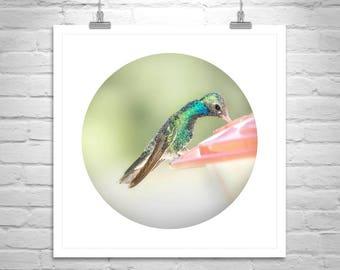 Hummingbird Art, Bird Picture, Art for Home, Bird Photography, Wildlife, Bird Print, Bird Art, Square, Round, Canvas Photo, Birthday Gift