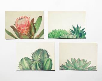 Botanical Postcards With Envelopes, Plant Photography, Succulents, Protea, Nature Photography, Affordable Art - Botanicals