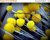 SummerSale15% Craspedia 12 short stem -Billy Balls-Billy Buttons-Dried Yellow Wedding Flowers-Bundle of 12
