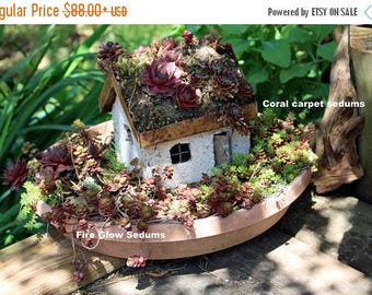 Save25% Succulent of the Month Club-Sedums of the Month Club- 6 or 12 months of assorted sedums-succulents-sands-gravel-Wedding Gift-Birthda