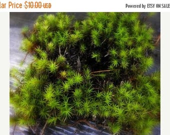 Save25% Haircap moss quart bag full-Live Moss-Miniature Tree Forest  for Terrariums- 4 or more sections-Haircap Moss for Shade and Terrarium