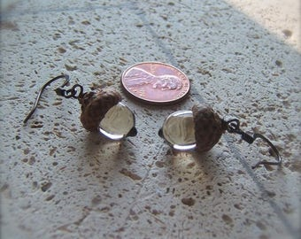 Glass Acorn Earrings in Transparent Light Brown by Bullseyebeads