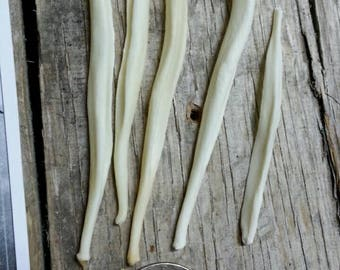 Canine Bacula Bones- 5 Baculum- Coyote Fox Real Bones- Lot No. 170610-UU