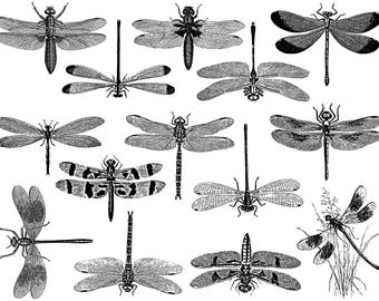 Dragonfly Ceramic Decals, Glass Fusing Decals, Waterslide Decals, Ceramic Transfers