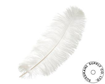 "Ostrich Feathers - Wholesale Wedding Feathers Ostrich Drab Plumes - White - 10pcs (14-17"")"