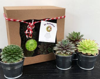 Succulent Gift Box with ORNAMENT or MAGNET, Succulent Christmas gift, gift for birthday, housewarming gift, memorial gift, t, coworker gift,