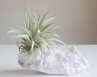Air Plant on Fluorite Geode Chunk, Frosty White with Sea Green and Lavender, Crystal Airplant Garden, Display, Boho Mermaid Decor