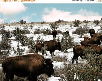 FLASH SALE til MIDNIGHT Bison in the snow no 2 FineArt 8x10 photograph