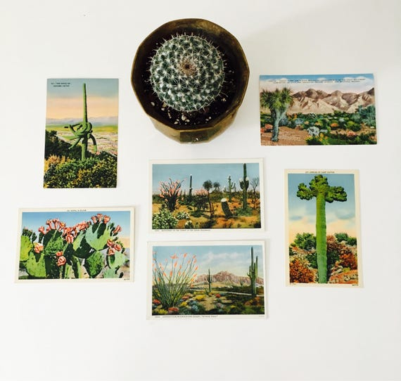 Vintage Cactus Linen Postcard Desert Landscape Postcard Collection Set of (6) Desert Botanicals
