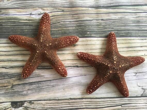 Large Starfish Wall Decor : Large beach starfish wall decor hangings