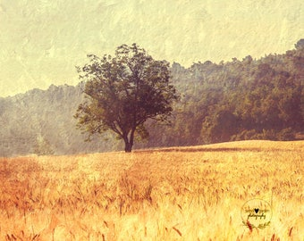 tree provence photography print, landscape photo, textured wall art, home decor, french style, travel, fine art photography, nature, field