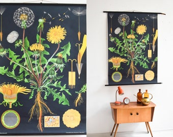 Dandelion poster, rustic wall poster, school poster, wall chart, educational poster