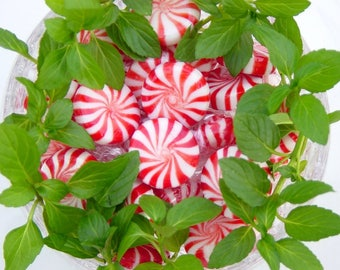 Peppermint Joy | Handcrafted Soap | Natural | Organic | Cold Processed Soap | Bath & Body