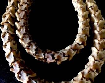 Authentic snake vertebrea necklace, snake vertebrae, snake necklace, snake jewelry, native snake necklace, Mexica snake, Indian snake jewlry