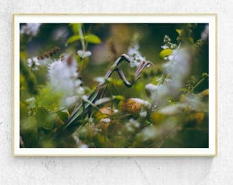 Praying Mantis Photo, FREE SHIPPING, Preying Mantis Photo, Prey Mantis Art Print, Preying Mantis Print, Bug Art, Insect Art, Insect Print