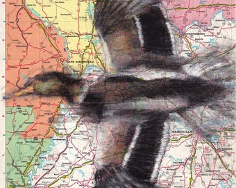 Custom Bird Drawing Duck #1 on Map