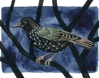 starling 5x7 art print