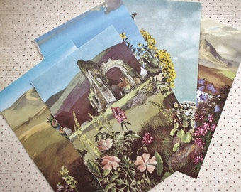 5 pages, Ladybird British Wild Flowers, book pages, Vintage Paper, Edith Holden