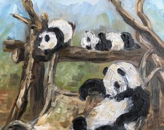 """Morning Nap - Pandas at Zoo Atlanta, oil on panel, 8"""" x 10"""""""