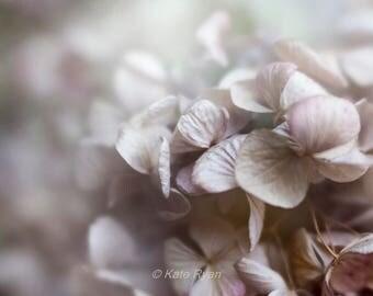 Pink Hydrangeas Print, Minimalist Wall Art, Soft Dreamy Floral Photo, Fine Art Photo, Bedroom Wall Art, Bathroom Powder Room Wall Decor