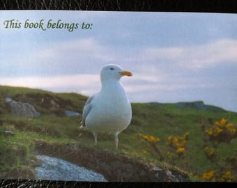 Gorgeous Gull bookplates (set of 12)