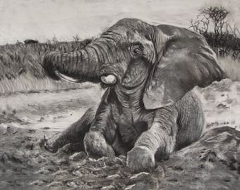 Mud Bath - Elephant charcoal Limited Edition Mounted A3 print direct from artist studio
