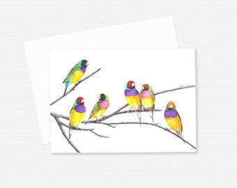 Gouldian Finches - Australian Greeting Card - Blank Gift Card