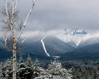 Mount Washington Birch ~ Bretton Woods, New Hampshire, Skiing, Mountain, Snowboarding, Art, Artwork, Photograph, New England, Snow, Winter