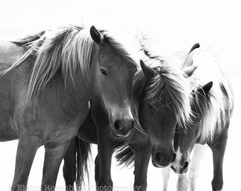 Horses, Wall Art, Home Decor, Photography, Ponies, Wild Ponies, Ponies on the Beach, Nature, Equestrian Art, Chincoteague, Black&White