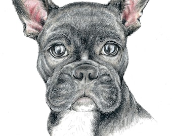 Frenchie illustration / art print / A4 and A5 size