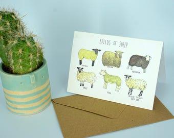 Sheep Greetings Card