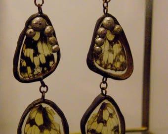 Dangling earrings with real butterfly wings (Melanargia galathea).