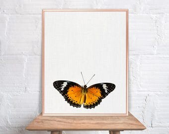 Butterfly wall art / Butterfly home decor / Butterfly Print / home decor Butterfly / Butterfly Art / Butterfly Wall Decor #57