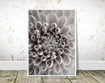 Dahlia Print, Black and White Floral Print, Printable Art, Botanical Print, Photography Print, Floral Art,Flower Print,Modern Decor,Wall Art