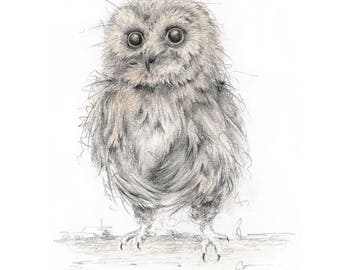 Limited Edition Giclee Owl Art Print